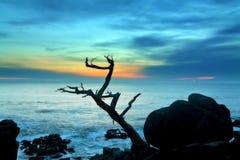 Albero all'oceano con il cielo di tramonto Fotografie Stock