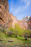 Albero alla base di Zion Cliff fotografia stock libera da diritti