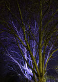 Albero alla notte Fotografie Stock Libere da Diritti