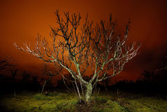Albero alla notte a Bustarviejo Fotografie Stock