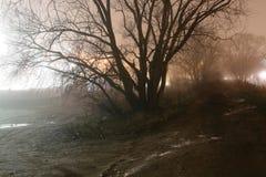 Albero alla notte nebbiosa immagine stock