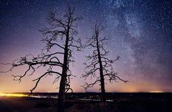 Albero alla notte stellata Fotografie Stock Libere da Diritti