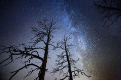 Albero alla notte stellata Immagine Stock Libera da Diritti