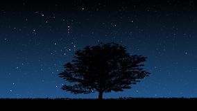 Albero alla notte stock footage