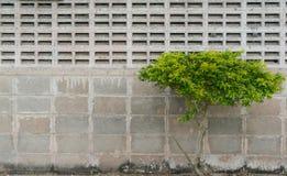 Albero alla parete Immagini Stock Libere da Diritti