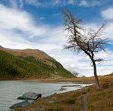 Albero alla sponda del fiume Immagini Stock