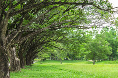 Albero allineato con erba verde Fotografia Stock