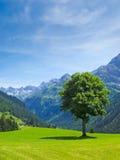 Albero, alpe e paesaggio della montagna Immagini Stock