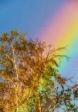 Albero alto con un arcobaleno del colorful&big immagini stock libere da diritti