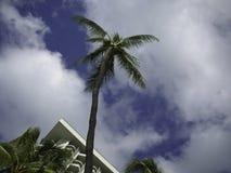 albero alto della palma Fotografie Stock