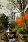 Albero appassito inverno in un parco immagine stock