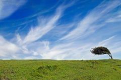 Albero appoggiato a vicino al lungonmare Immagine Stock Libera da Diritti