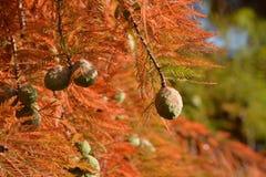 Albero arancione di autunno Fotografie Stock Libere da Diritti