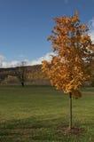 albero arancione di caduta Fotografia Stock