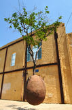 Albero arancione librantesi Jaffa, Israele Fotografia Stock