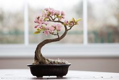 Albero artificiale dei bonsai con i fiori Fotografia Stock