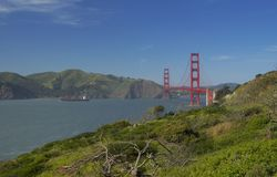 Albero asciutto e golden gate bridge, San Francisco, California, U.S.A. Fotografie Stock