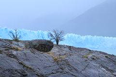 Albero asciutto e grande ghiacciaio immagini stock libere da diritti