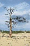 Albero asciutto nel deserto Immagini Stock Libere da Diritti