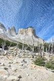 Albero asciutto nel parco nazionale di Torres del Paine, Cuernos, Patagonia, fotografia stock libera da diritti