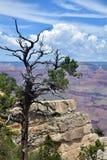 Albero asciutto sopra Grand Canyon Fotografie Stock