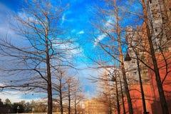 Albero asciutto sotto cielo blu soleggiato, in città del centro di Houston Fotografia Stock Libera da Diritti