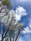 Albero asciutto sul fondo del cielo nuvoloso immagine stock libera da diritti