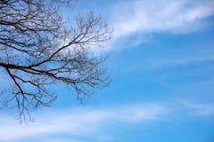 Albero asciutto sul fondo del sole e del cielo blu Fotografia Stock
