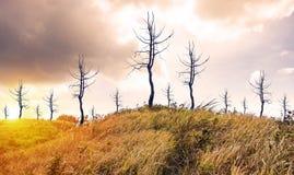 Albero asciutto sulla luce dorata del prato di punta della montagna Fotografie Stock