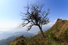 Albero asciutto sulle montagne Fotografia Stock