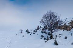 Albero astratto nell'inverno Fotografia Stock Libera da Diritti