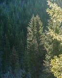 Albero attillato alla luce del sole Fotografie Stock
