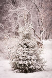 Albero attillato con l'inverno della neve Immagini Stock Libere da Diritti