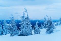 Albero attillato nella neve su una collina della montagna Fotografia Stock