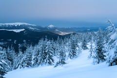 Albero attillato nella neve su una collina della montagna Immagini Stock Libere da Diritti