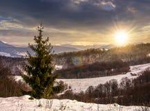 Albero attillato sul prato nevoso in montagne al tramonto Fotografia Stock Libera da Diritti