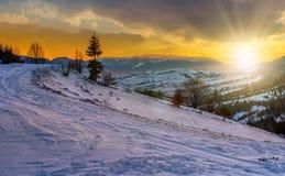 Albero attillato sul prato nevoso in montagne al tramonto Immagini Stock Libere da Diritti