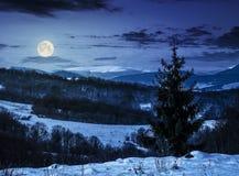 Albero attillato sul prato nevoso in montagne alla notte Fotografie Stock Libere da Diritti