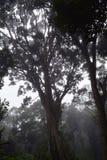 Albero attraente enorme con i rami multipli con in Misty Forest densa con il posto scuro e pericoloso Fotografia Stock Libera da Diritti