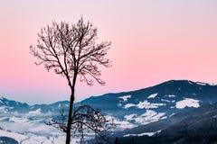 Albero audace nel winterscape della montagna Immagini Stock
