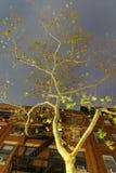 Albero autunnale su una via di Manhattan alla notte, New York immagine stock libera da diritti