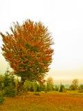 Albero in autunno fotografia stock libera da diritti