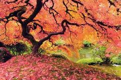 Albero in autunno immagine stock