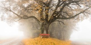 Albero in autunno con un banco di parco fotografia stock
