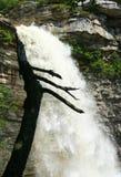 albero awosting della siluetta di cadute Immagini Stock Libere da Diritti