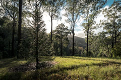 Albero backlit dal sole ai giardini botanici alti del supporto Immagini Stock
