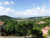 Albero in Barbados Fotografia Stock Libera da Diritti