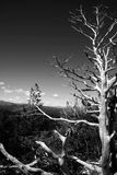 Albero a Bariloche Fotografia Stock