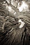 Albero in bianco e nero con il sole Fotografia Stock Libera da Diritti
