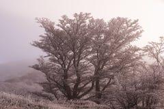 Albero bianco ed inverno Fotografie Stock Libere da Diritti